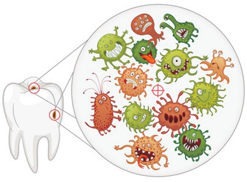 Бактерии зуба