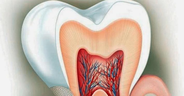 Состав дентина зубов