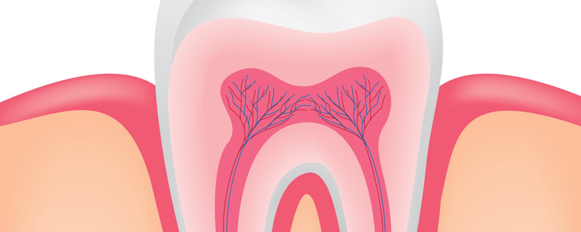 Нервы зуба