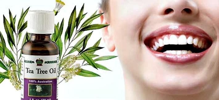 Полезные свойства чайного дерева